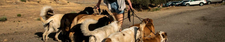 Educação Canina Adestramento e Comportamento Canino profile