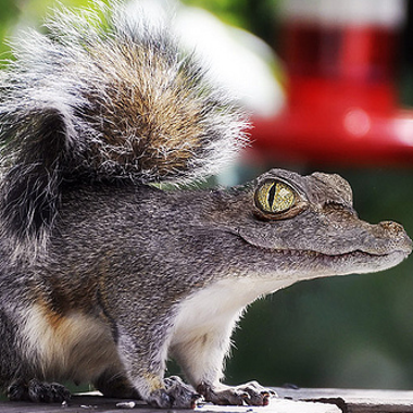 Lord Crocosquirrel