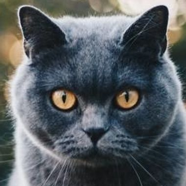 Meowtch