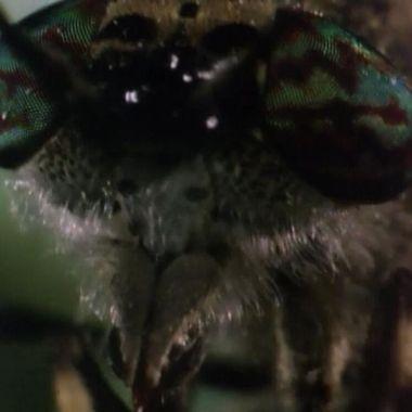 Aqua Mosquito
