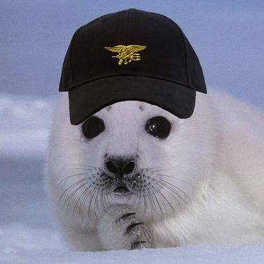 Ask a SEAL