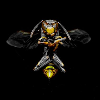 Wasp News Media