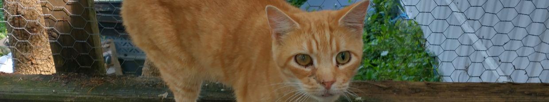 Cattails profile
